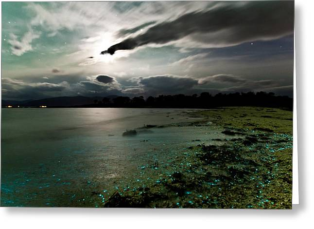 Scattered With Dinoflagellates Greeting Card by Frank Olsen