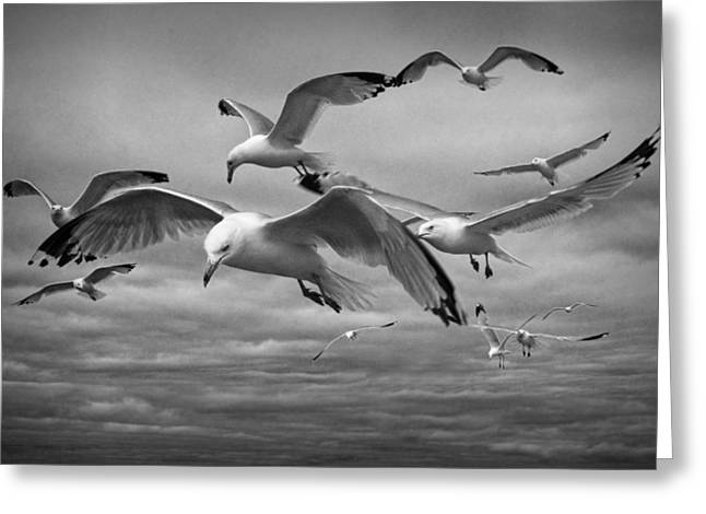 Sea Gull Scavengers Greeting Card by Randall Nyhof
