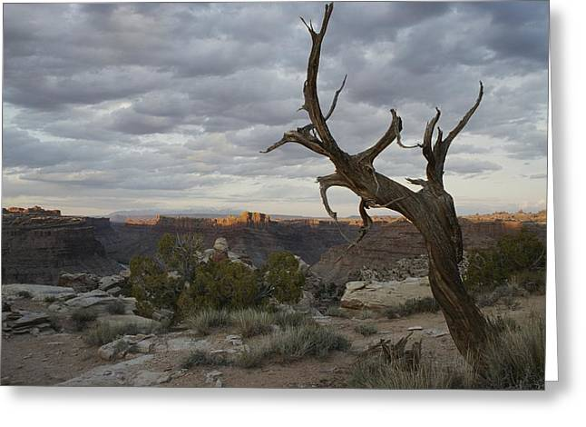 Scenic View Of Canyonlands With Mesas Greeting Card by Stephen Alvarez