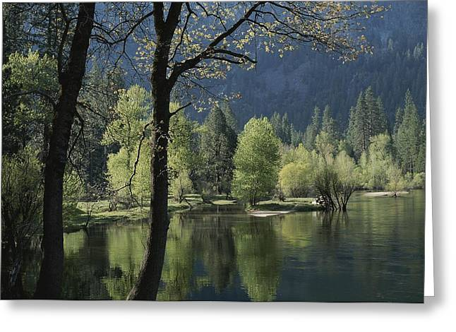 Woodland Scenes Greeting Cards - Scenic View Of The Merced River Greeting Card by Marc Moritsch