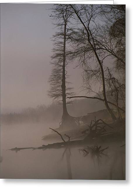 Tennessee River Greeting Cards - Scenic View Of Trees On The Bank Greeting Card by Sam Abell