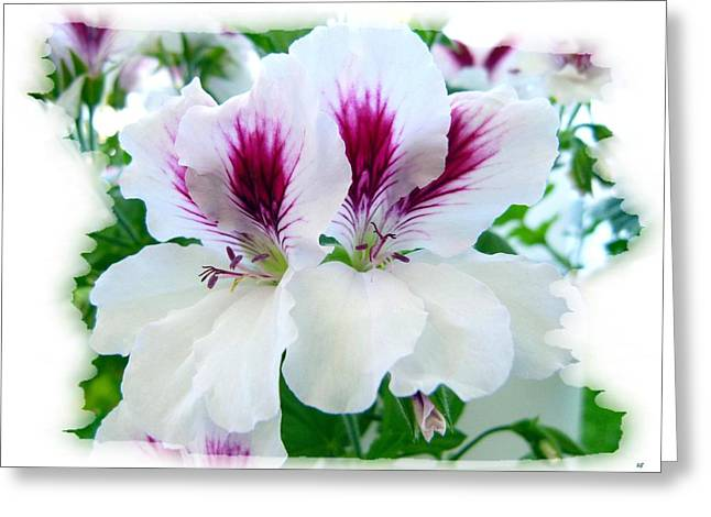 Macro Geranium Flower Greeting Cards - Scented Geraniums 2 Greeting Card by Will Borden