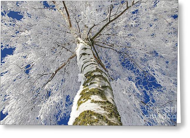 Deutschland Greeting Cards - Snowworld Fineart  Greeting Card by Tanja Riedel