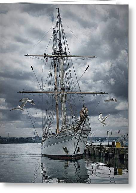 Halifax Art Greeting Cards - Schooner in Halifax Harbor Greeting Card by Randall Nyhof