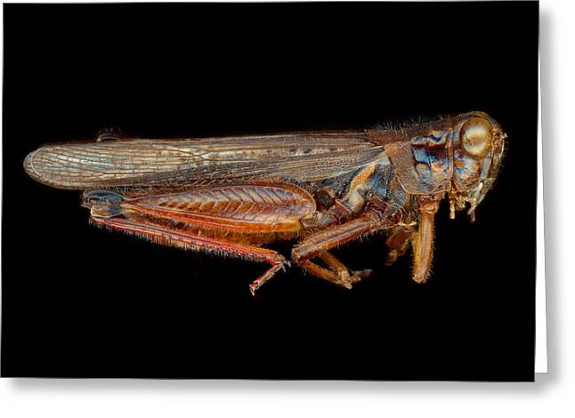 Science - Entomology - The specimin Greeting Card by Mike Savad