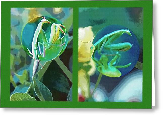 Nature Study Mixed Media Greeting Cards - Science Class Diptych - Praying Mantis Greeting Card by Steve Ohlsen