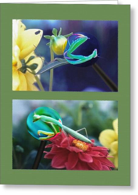 Nature Study Mixed Media Greeting Cards - Science Class Diptych 2 - Praying Mantis Greeting Card by Steve Ohlsen