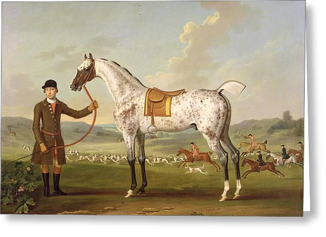 Dappled Greeting Cards - Scipio - Colonel Roches Spotted Hunter Greeting Card by Thomas Spencer