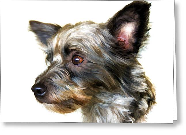Puppy Dog Eyes Greeting Cards - Scooter Greeting Card by Steven Richardson