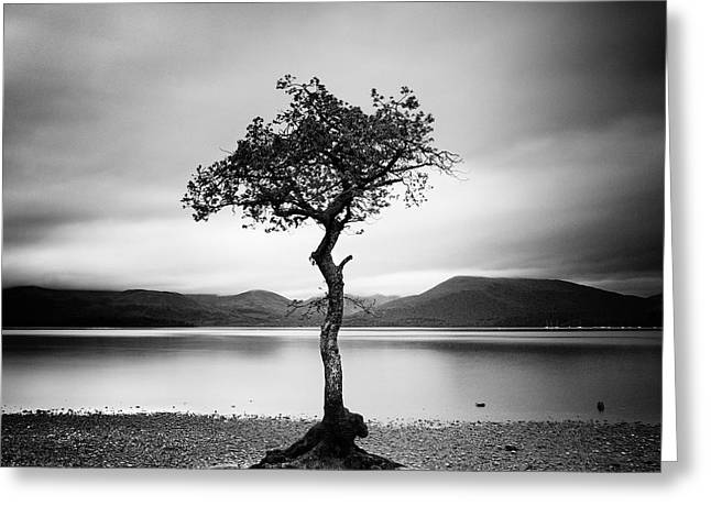 Fine Art White Nature Trees Greeting Cards - Scotland Milarrochy Tree Greeting Card by Nina Papiorek