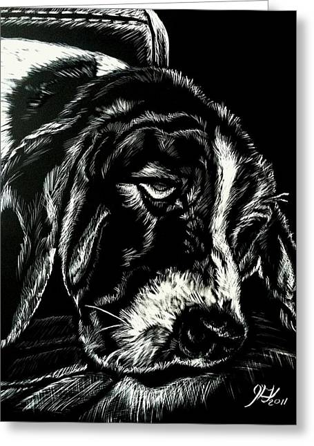 Basset Drawings Greeting Cards - Scratchboard Basset Greeting Card by Jenny Greiner