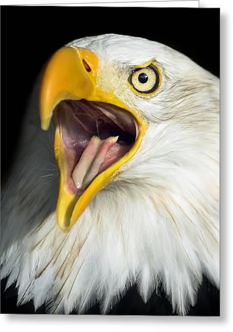 Shout Greeting Cards - Screaming Eagle Portrait Greeting Card by Artur Bogacki