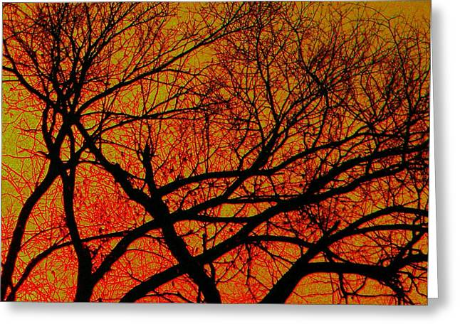 Scrub Brush Greeting Cards - Scrub At Sunset Greeting Card by Chris Berry