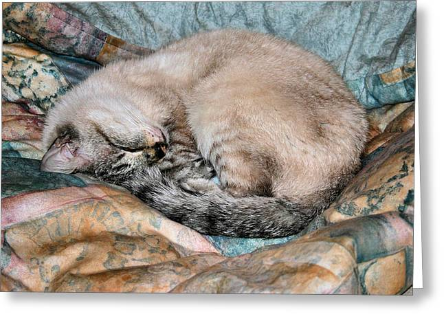 Cat Sleeping Greeting Cards - Scruffie Greeting Card by Kristin Elmquist
