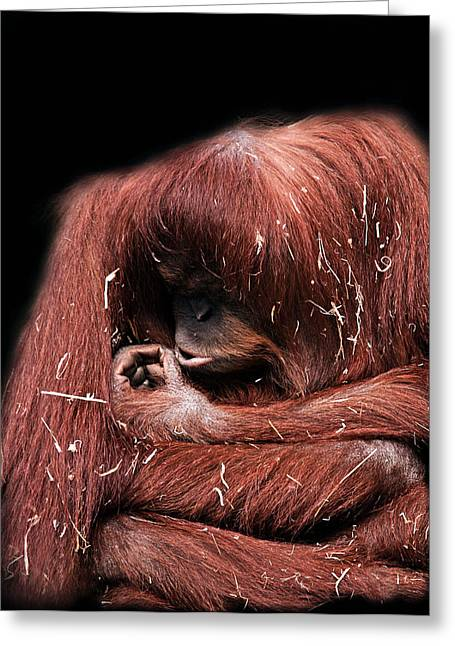 Orangutan Digital Art Greeting Cards - Scrutiny Greeting Card by Lesley Smitheringale