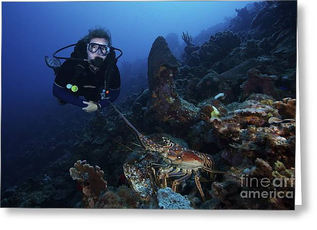 Undersea Photography Greeting Cards - Scuba Diver And A Common Spiny Lobster Greeting Card by Terry Moore