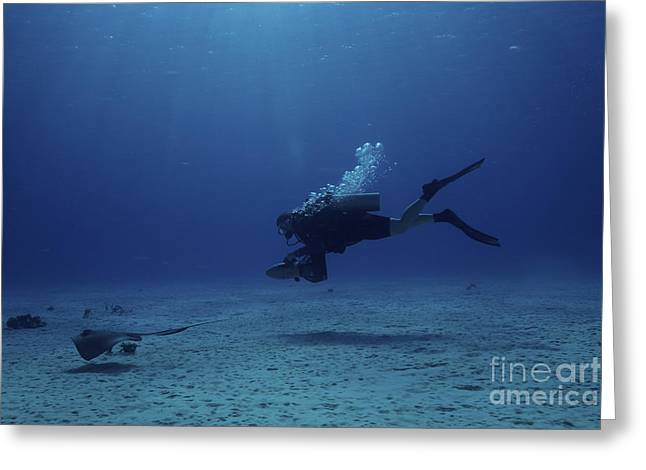 Ocean Floor Greeting Cards - Scuba Diver Follows A Stingray Greeting Card by Terry Moore