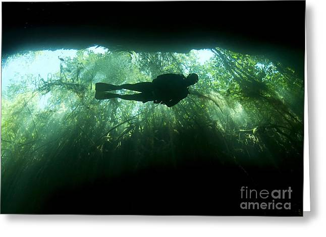 Cenote Greeting Cards - Scuba Diver In The Cavern Part Greeting Card by Karen Doody