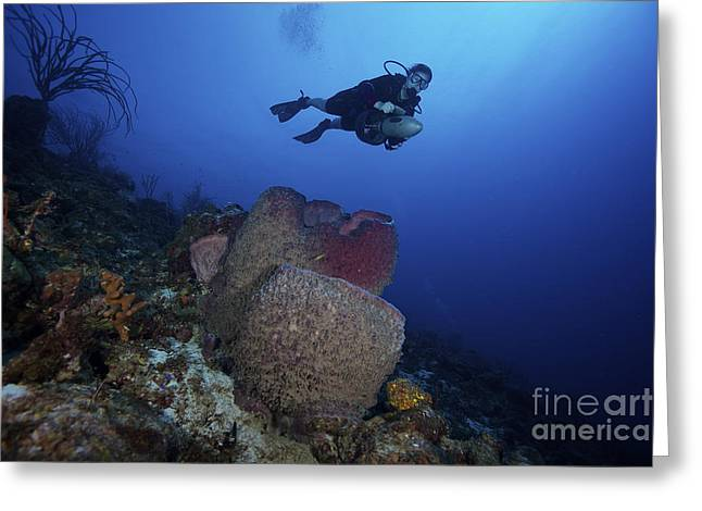Undersea Photography Greeting Cards - Scuba Diver Propels Above A Large Greeting Card by Terry Moore