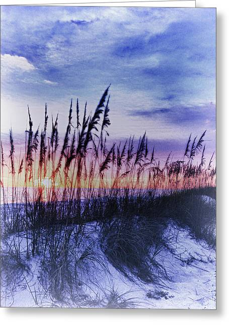 Se Oats 2 Greeting Card by Skip Nall
