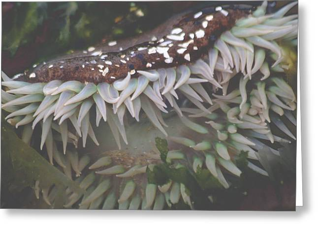 Opalescent Greeting Cards - Sea Anemone Greeting Card by Holly Ethan
