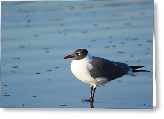 Sea Bird Reflection Greeting Card by Pat Exum