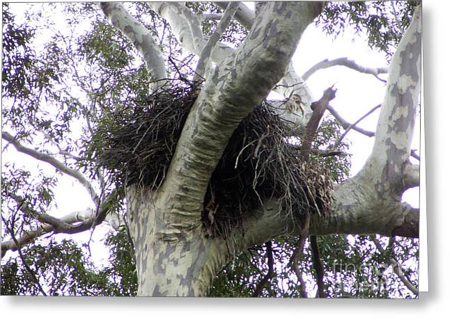 Joanne Kocwin Greeting Cards - Sea Eagle Nest Greeting Card by Joanne Kocwin