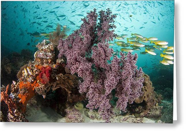 Snapper Greeting Cards - Sea Fan And Schooling Snappers Greeting Card by Matthew Oldfield