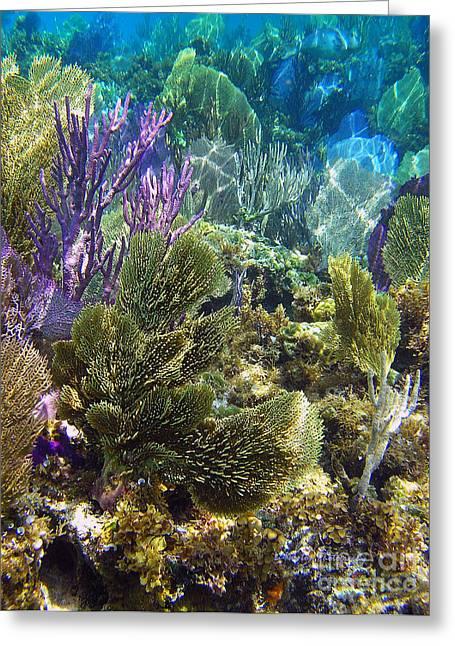 Undersea Photography Greeting Cards - Sea Fan Fare Greeting Card by Li Newton
