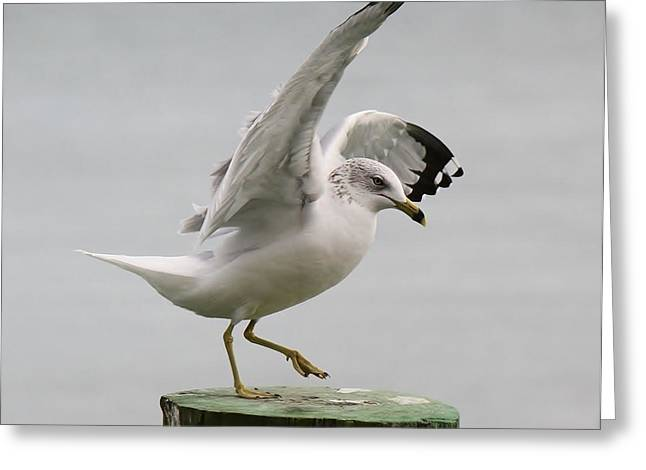 Sea Gull Dance Greeting Card by Paulette Thomas