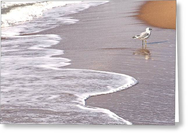 A Hot Summer Day Greeting Cards - Sea Gull Reflection Greeting Card by Cindy Lee Longhini