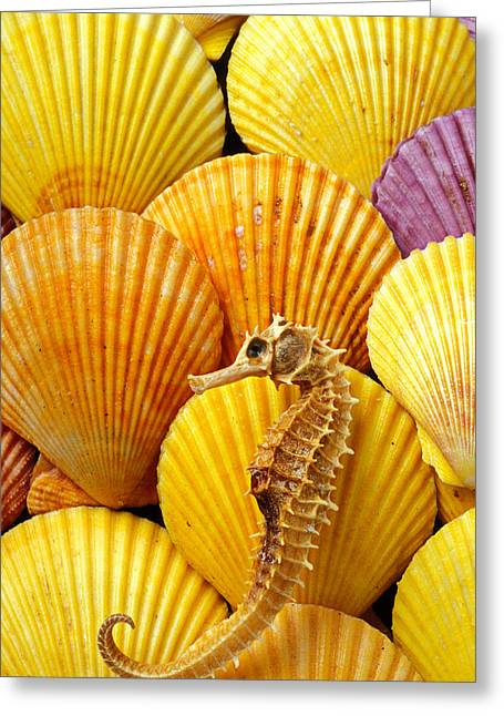 Sea Horse Greeting Cards - Sea horse and sea shells Greeting Card by Garry Gay
