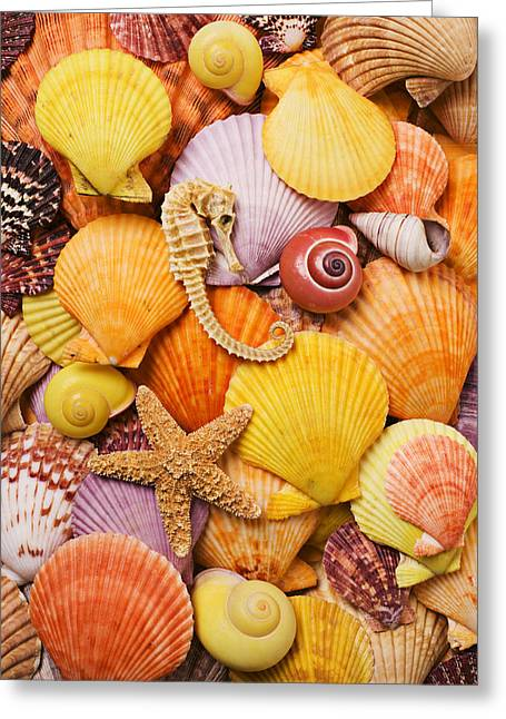 Shell Texture Greeting Cards - Sea horse starfish and seashells  Greeting Card by Garry Gay