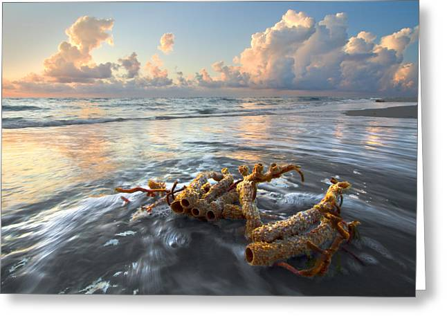 Hobe Sound Greeting Cards - Sea Jewel Greeting Card by Debra and Dave Vanderlaan