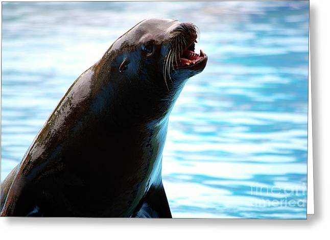 Swimmers Photographs Greeting Cards - Sea-Lion Greeting Card by Carlos Caetano