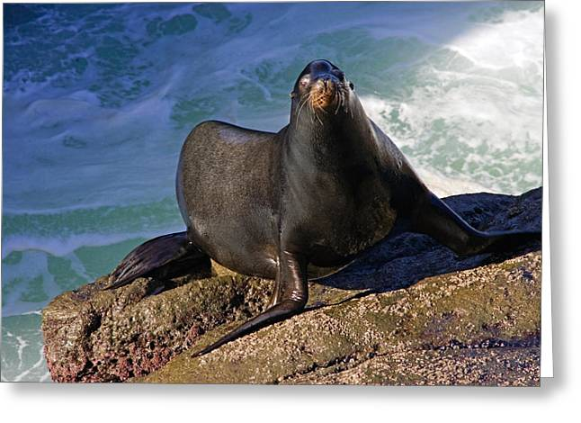 Sea Lions Greeting Cards - Sea Lion Exit Greeting Card by Randall Ingalls