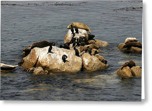 Recently Sold -  - California Sea Lions Greeting Cards - Sea Lions and Birds Greeting Card by Marilyn Hunt