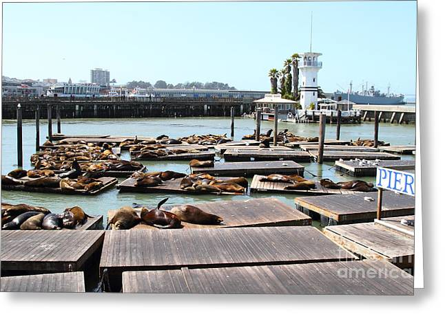 Sealions Greeting Cards - Sea Lions At Pier 39 San Francisco California . 7D14309 Greeting Card by Wingsdomain Art and Photography