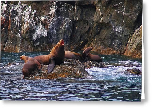 Sea Lions Greeting Cards - Sea Lions Greeting Card by Harry Spitz