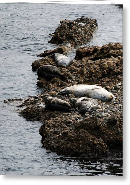 Point Lobos Greeting Cards - Sea Lions Rock Greeting Card by Harvey Barrison