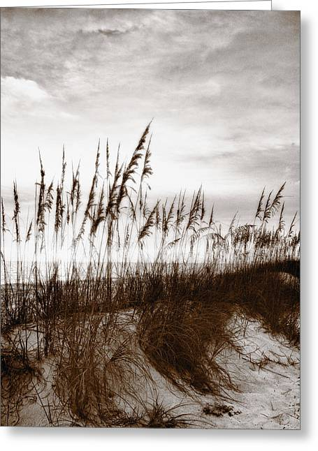 Reverence Greeting Cards - Sea Oats 1 Greeting Card by Skip Nall