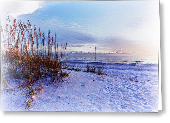 Reverence Greeting Cards - Sea Oats 3 Greeting Card by Skip Nall