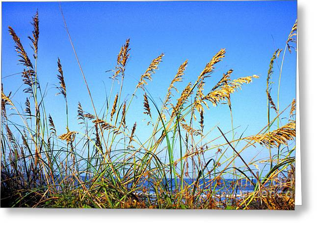 Smyrna Greeting Cards - Sea Oats and Sea Greeting Card by Thomas R Fletcher
