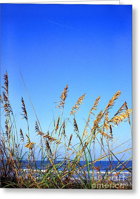 Smyrna Greeting Cards - Sea Oats Atlantic Ocean Greeting Card by Thomas R Fletcher