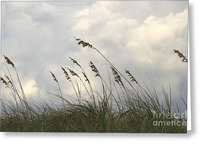 Sea Plants Greeting Cards - Sea oats Greeting Card by Blink Images