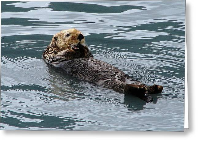 Ocean Mammals Greeting Cards - Sea Otter Greeting Card by Angie Vogel