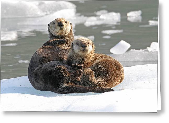 Sea Otter Enhydra Lutris Female Greeting Card by Michael Gore