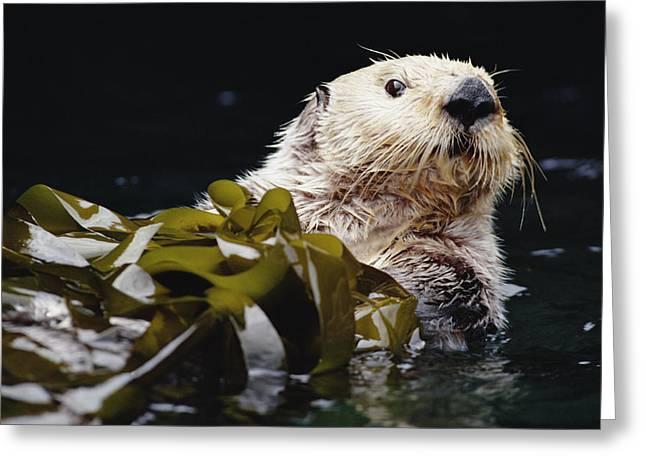 Sea Otter Enhydra Lutris Portrait Greeting Card by Gerry Ellis
