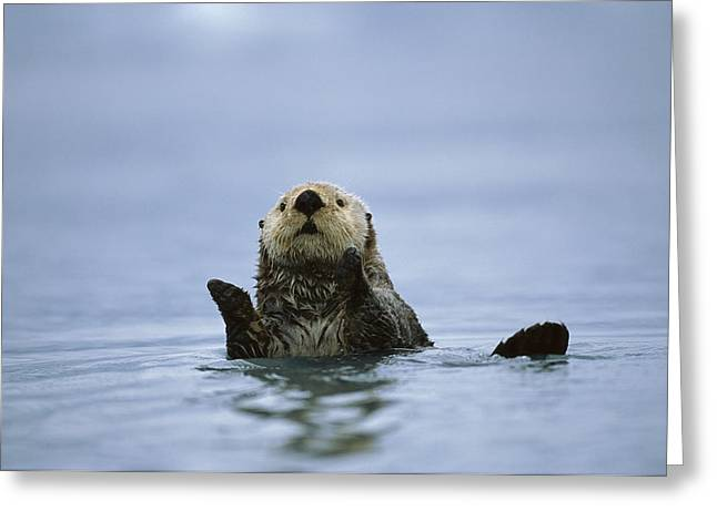 Clapping Greeting Cards - Sea Otter In  Prince William Sound Greeting Card by Suzi Eszterhas