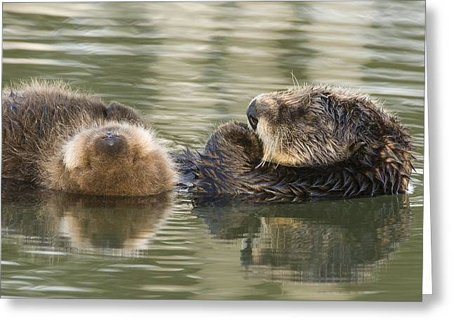 Moss Landing California Greeting Cards - Sea Otter Mother And Pup Sleeping Greeting Card by Sebastian Kennerknecht